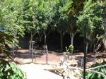 Highlight for Album: San Diego Zoo, 07/06